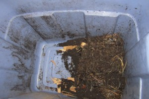 compost, worms, worm bin