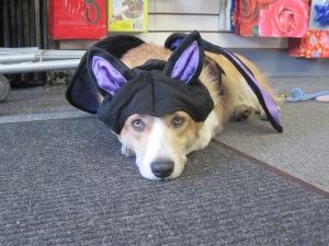 halloween costumes2011 008