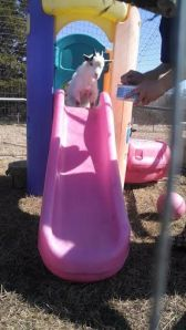 pixie on the slide