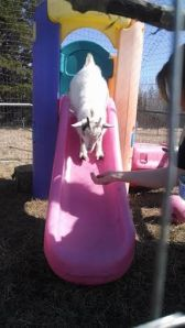 pixie sliding