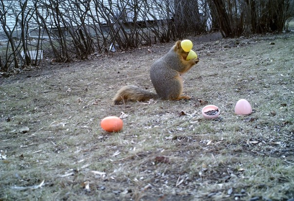 Easter Squirrel-117