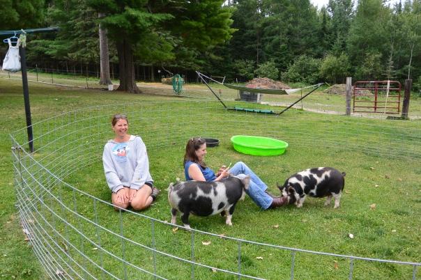 kunekune, cookscountryconnection, petting farm, petting zoo, pigs